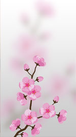Обои Sakura